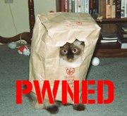 180Px-Pwned Cat1